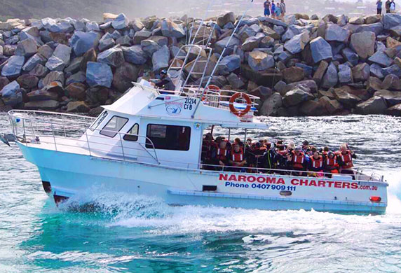 Narooma Whale Watching Tours