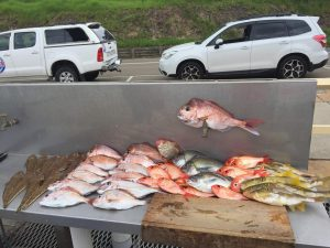 examples of catches fishing with Narooma Charters